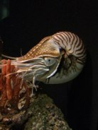 naughty shell